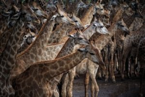 Stand out from the crowd CV cliches irritate a recruitment consultant