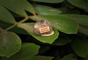Snail hiding in his shell with sign 'do not disturb'