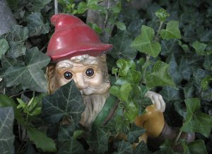A gnome hiding in the bushes