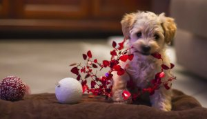 puppy playing with Christmas decorations