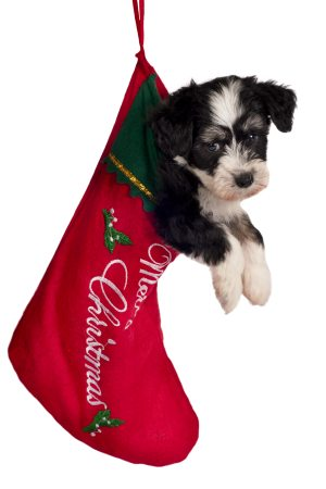a puppy in a stocking