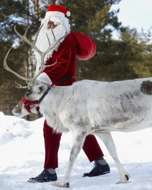 Santa Claus walking with his reindeer in the wood