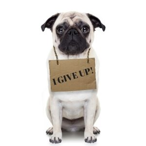 pug holding a sign saying 'I give up'