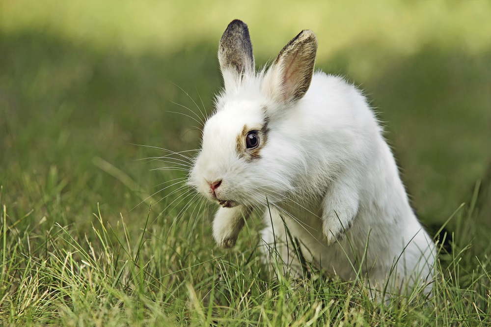 a bunny jumping