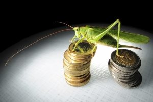 grasshopper sitting on some money