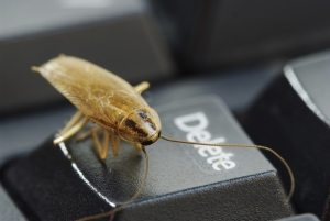 coackroach sat on the Delete button of a keyboard