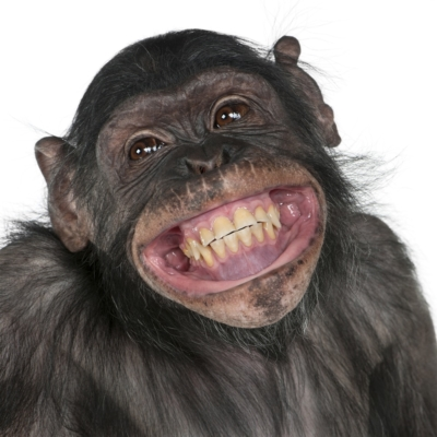 ape with a huge smile!