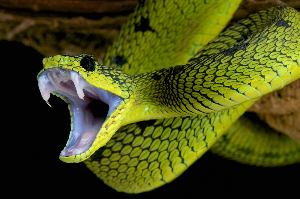 """World's Scariest Jobs: Would you be a """"snake milker?"""""""