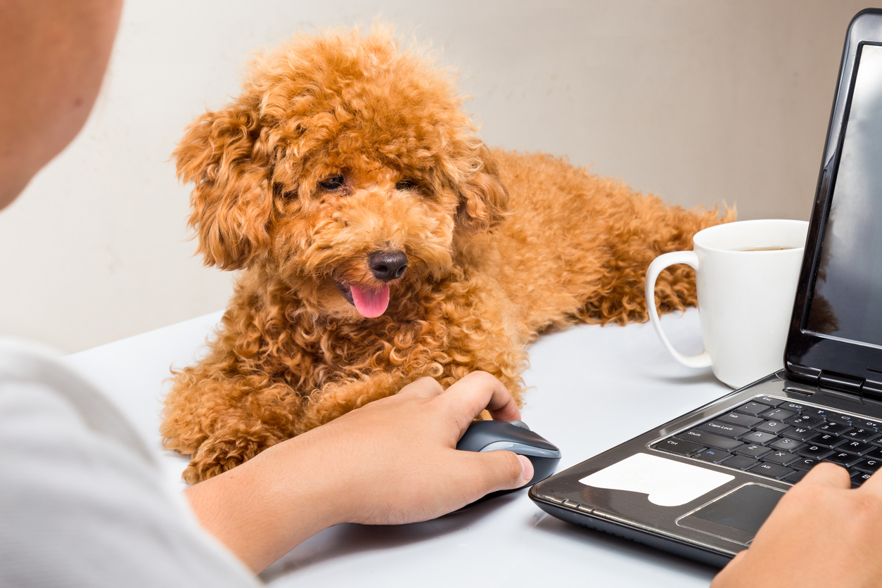 4 Reasons Why Getting an Office Dog is a Great Idea